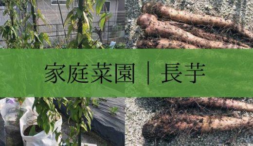 家庭菜園|簡単に長芋を育てて収穫する方法(袋栽培)