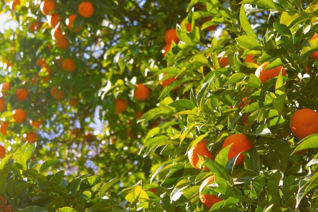 orangeye