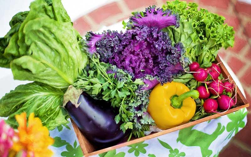 家庭菜園|秋冬野菜を「ぐうたら農法」で育ててみます