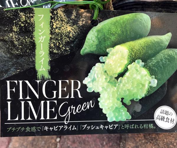 fingerlime