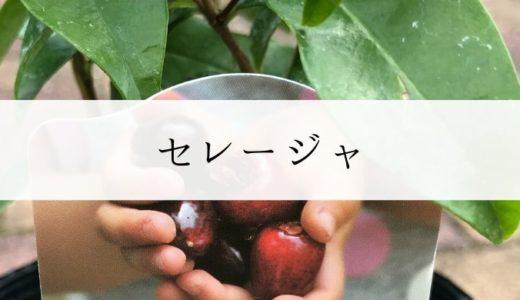 セレージャ(トロピカルフルーツ)を育てます