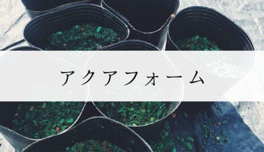 後悔しないアクアフォームの使い方|ブルーベリー養液栽培