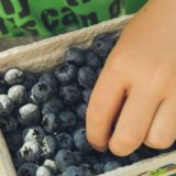 【まとめ】ブルーベリー養液栽培を自宅で行うかんたん栽培キットについて