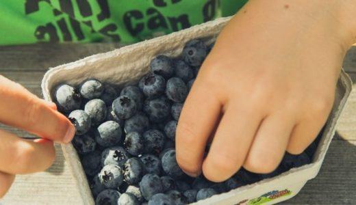 【まとめ】ブルーベリー養液栽培を自宅で行うかんたんキットについて