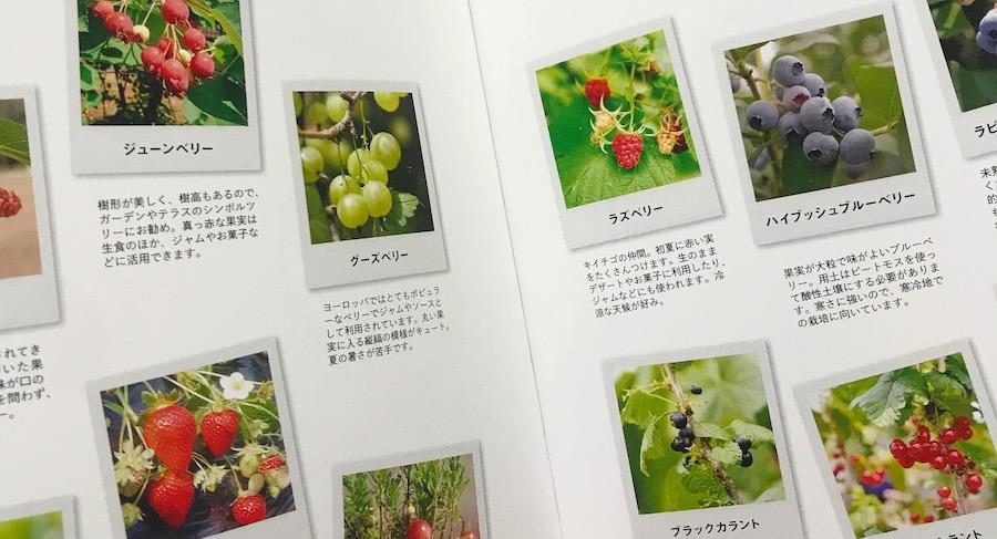 ベリー栽培を知るためにおすすめ おいしいベリーを育てる本【書評】