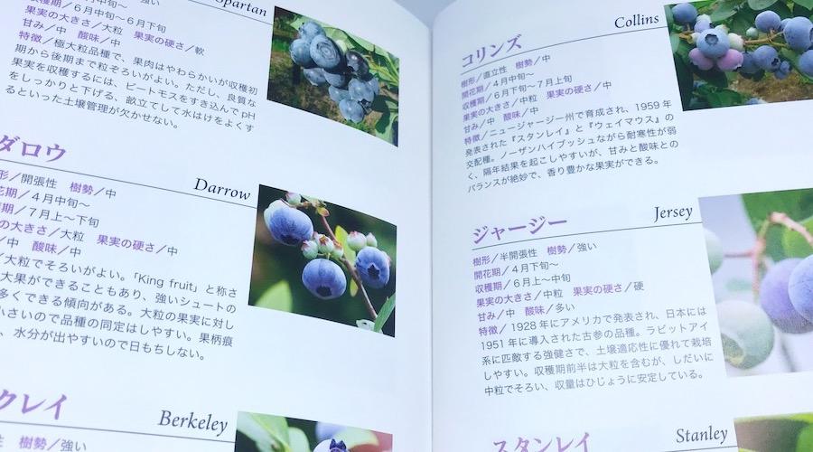 ブルーベリー栽培を家庭で楽しみたい方へ|家庭でできるおいしいブルーベリー栽培12ヶ月【書評】