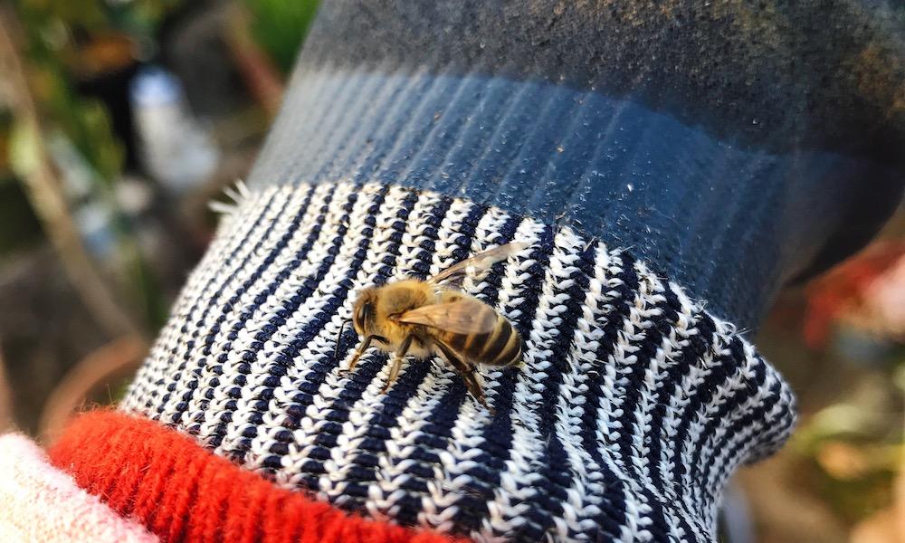 ニホンミツバチを初捕獲、そして飼育の方法を簡単に紹介します